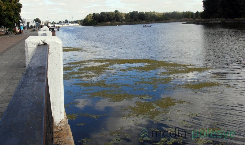 Распространению водных растений способствует почти полное отсутствие судоходства на Пине