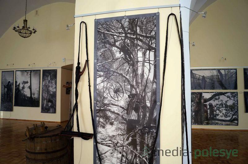 С помощью длинной верёвки и специального сиденья бортники, как альпинисты, забираются на высокие деревья за мёдом