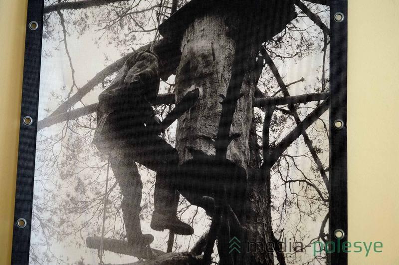 Старые бортники работали без специальных сеток на лице, которые защищают от укусов пчёл