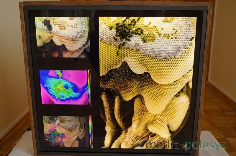 Кшиштоф Хейке следил за жизнью пчёл с помощью современных видеокамер