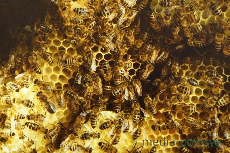 Пчёлы делают мёд