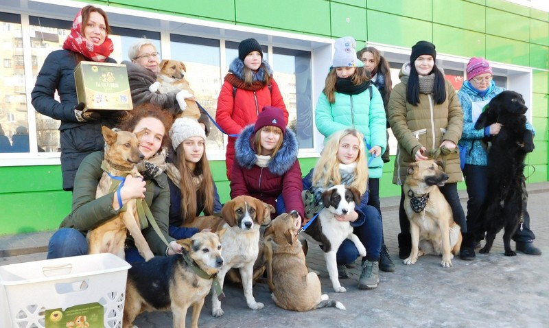 Волонтёры со своими подопечными. Фото со страницы ВКонтакте организации «Преданность другу»