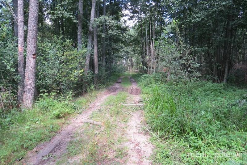 Лесная дорога, обходящая памятник природы с южной стороны. Август 2018 г