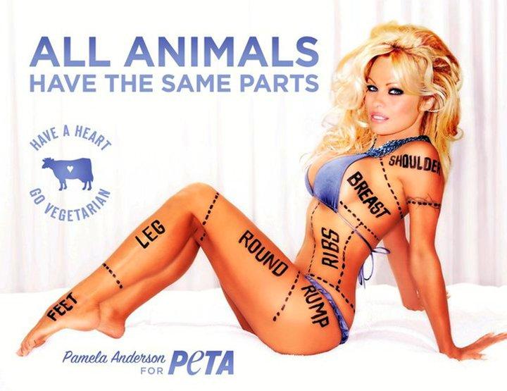 Памела всегда участвует в зоозащитных акциях