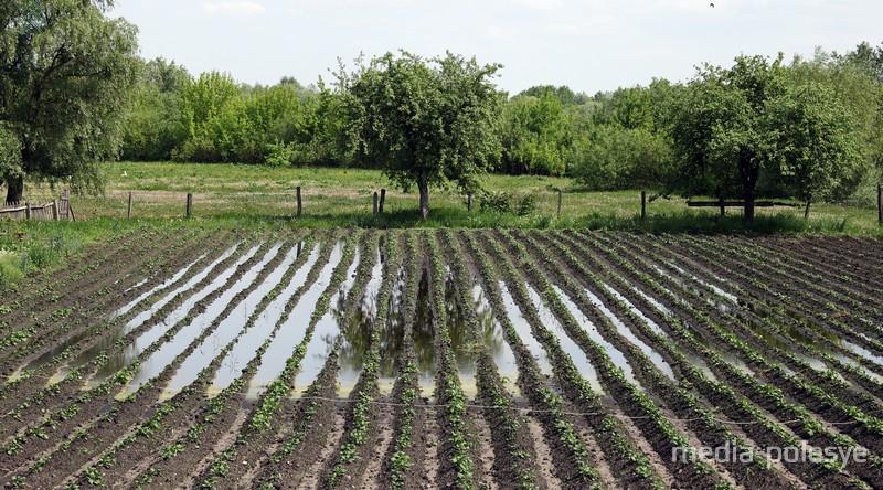 Картошку в Белоуше тоже затопило