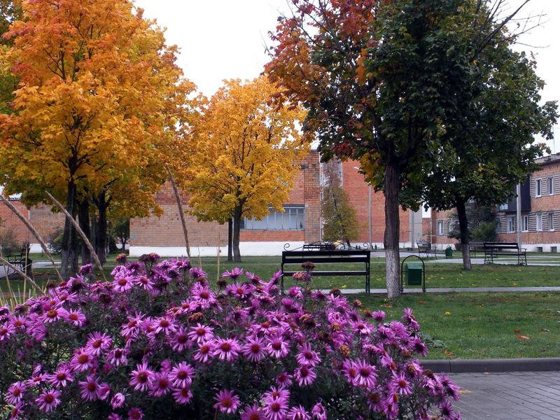 Последние цветы осени