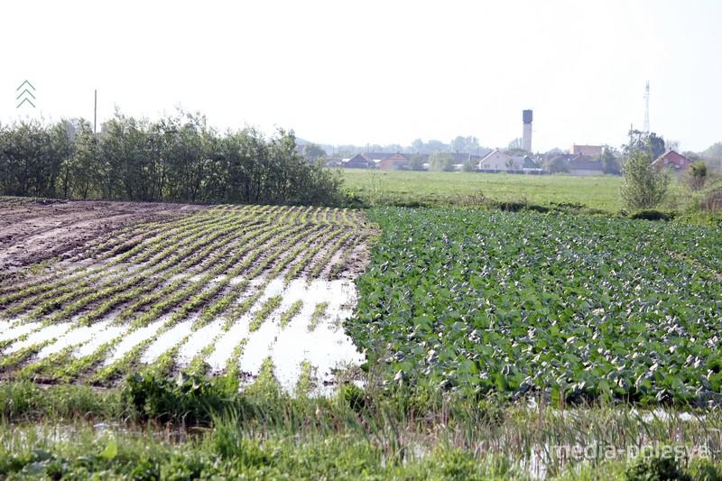 В Рубле спасают будущий урожай. Насосы работают сутками