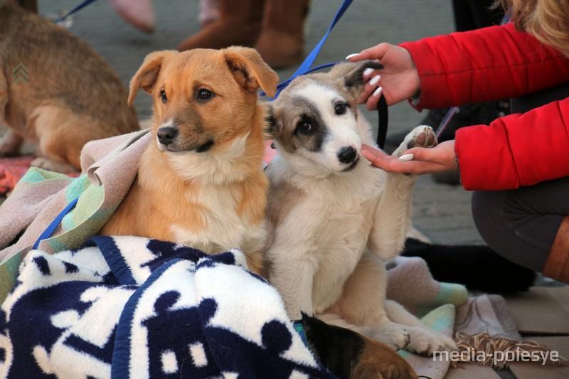 Собакам из отлова пытаются найти хозяев