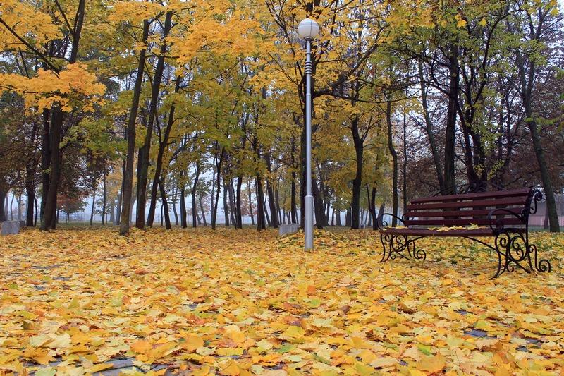 Утро осеннего парка