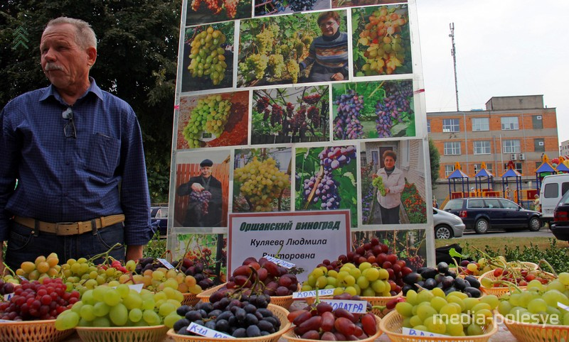 Виноград из Орши