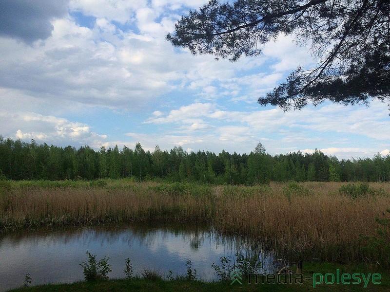 Несмотря на то, что Пурховка зарастает, желающих искупнуться в этом водоёме всегда достаточно