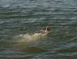 Ещё один утонувший на Пинщине