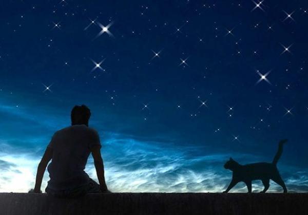 Как кошка выбирает хозяина (и духовное значение ее выбора)