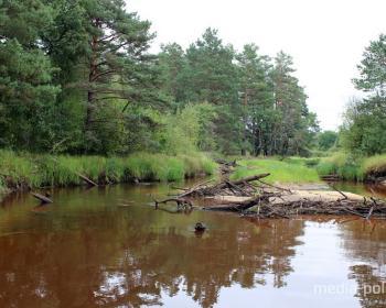 По реке Ствига среди Ольманских болот