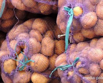 Картофель. Сравниваем цены и готовим драники
