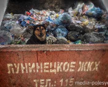 Видеоролик об умерщвлении собак в Лунинце увидела Брижит Бардо и написала письмо Лукашенко