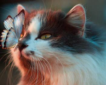 Кошки защищают вас и ваш дом от злых духов и негативной энергии