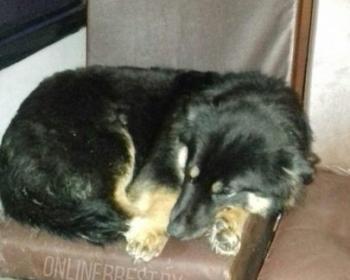 В Бресте потерявшийся пес около полугода ездил в автобусах в надежде найти своих хозяев. И нашел!