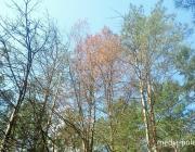 Пропавшего без вести в Лунинецком районе мужчину нашли спящим в лесу
