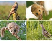 Двухсотлетние дубы и липы, единственная на Полесье сосна, редкие виды животных, остатки шикарных парков. В чём ещё уникальность новых природных памятников на Пинщине?