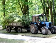 В парке «Маньковичи» начата санитарная рубка