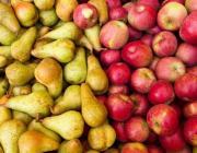 С 12 апреля Россельхознадзор вводит ограничения на поставки в Россию яблок и груш из Беларуси