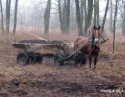 «Затариться» плодородной почвой ольшанцам помешала природоохрана