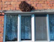 Рой пчёл облюбовал пинскую многоэтажку