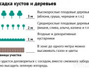 """""""Посадил клен в метре от забора, теперь проблемы с соседом"""". Где по нормам можно сажать деревья"""