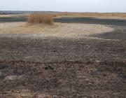Сколько лесных и торфяных пожаров произошло на Пинщине?