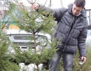 Дешевле купить, чем украсть: в Столине назвали цены на новогодние ели
