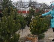 Где купить натуральную ёлку в Пинске?