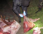 Охотников, бросивших мешки с мясом лося, нашли. Им грозит тюрьма