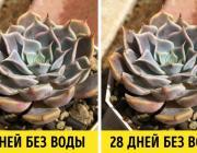 Мы собрали 13 домашних растений, которые приносят максимум пользы, но требуют минимум забот