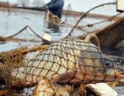 8,7 км сетей изъяли у браконьеров на Лунинетчине
