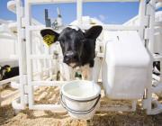 Молочно-товарный комплекс по белорусскому образцу построят в Молдове