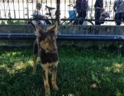 В столице Полесья массово отлавливают безнадзорных животных