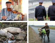 Мертвые свиньи в лесу, «халявная» капуста, вечерняя прогулка за 1000 рублей и многое другое