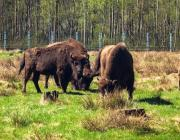 Беловежскую пущу не лишат статуса природного наследия ЮНЕСКО