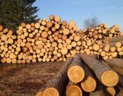В Беларуси вводится лицензирование экспорта всех видов круглых лесоматериалов