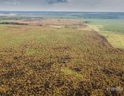 Пожар в Ольманских болотах ликвидировали