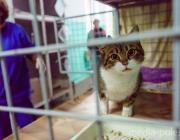 Объявлена бесплатная вакцинация собак и кошек в Пинске