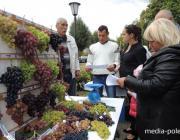Белорусские виноградари съедутся в Пинск