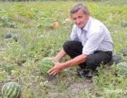 Семья из Ремля вырастила пару дюжин арбузов