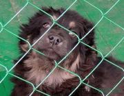 В Столине построили пункт временного содержания домашних животных