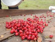 С 25 августа в Брестской области разрешён сбор клюквы