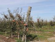 Фермерское хозяйство «Ольшаны» – лучшее в стране