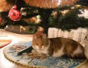 В Микашевичах спасатели вытащили кошку из вентшахты девятиэтажного дома