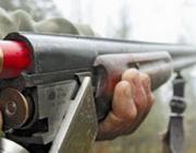 Застрелив косулю, браконьеры бросили тушу животного и сбежали