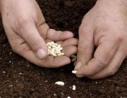 Как сеять садовые культуры в зиму: 5 главных советов